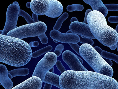 Human bacteria