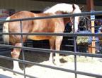 Worlds Largest Horse