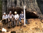 Worlds most dangerous jobs logging